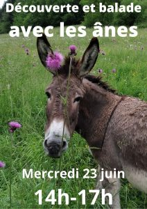Sortie Famille : découverte et balade avec les ânes @ Vallon de la Fauge