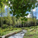 Sortie nature à la journée : découverte de l'étang de Cote-Manin